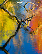 An interesting alignment of reflecting fall colors and blue skies (Red, Yellow, Blue) on Amos Pond in Pickering, Ontario, with the sagging branch and its' reflection adding further interest and providing separation of the colors.