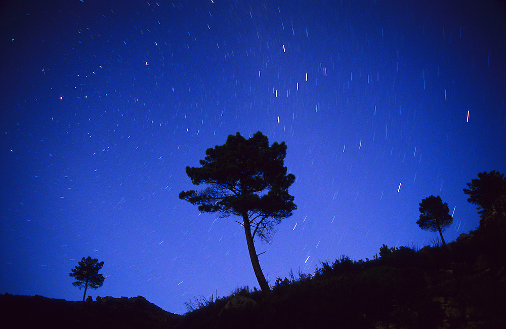 Pine trees and star trails in the Geres National Park, in the north of Portugal