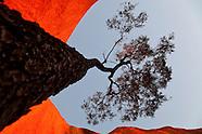Bloodwood Circumnavigation-Uluru