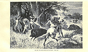 Iron Age, The Chase boar hunting according to the French illustrator Emile Bayard (1837-1891), illustration Artwork published in Primitive Man by Louis Figuier (1819-1894), Published in London by Chapman and Hall 193 Piccadilly in 1870