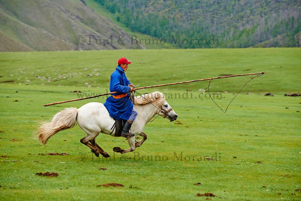 Mongolie, Province de Ovorkhangai, Vallee de l'Orkhon, campement nomade, Dorjdagva rassemble ses chevaux // Mongolia, Ovorkhangai province, Okhon valley, Nomad camp, Rallying of horses drove with Dorjdagva