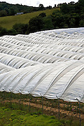 Polytunnels on a fruit farm in Perthshire, Scotland, United Kingdom
