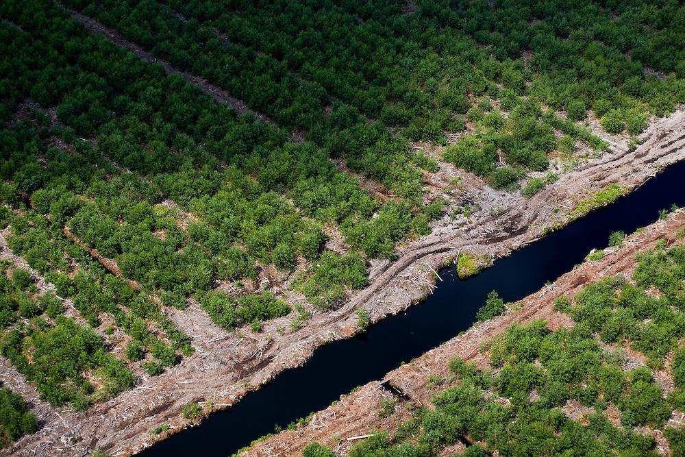 Acacia plantations (for pulp or paper production) near Siak, Sumatra, Indonesia, Aug. 30, 2008..Daniel Beltra/Greenpeace