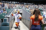 DETROIT, MI - JUNE 19: Detroit Tigers mascot Paws gets ready during the game against the Baltimore Orioles at Comerica Park on June 19, 2013 in Detroit, Michigan. Orioles won 13-3. (Photo by Joe Robbins)