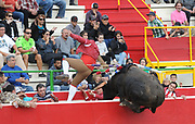 BEA AHBECK/NEWS-SENTINEL<br /> A member of Amadores de Ramo Grande de Terceira gets tossed over the wall by the bull during the bloodless bullfight during the Our Lady of Fatima Portuguese Festival in Thornton Saturday, Oct. 15, 2016.