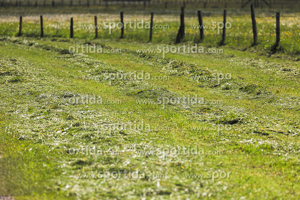 THEMENBILD - frische gemähtes Gras in Reihen auf einer Wiese, aufgenommen am 23. Mai 2019, Kaprun, Österreich // fresh mown grass in rows on a meadow on 2019/05/23, Kaprun, Austria. EXPA Pictures © 2019, PhotoCredit: EXPA/ Stefanie Oberhauser