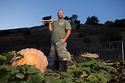 Don Davis poses for a portrait in one of pumpkin patches at his home in Milpitas, Calif., on Oct. 21, 2012.  Davis spends countless hours year round, caring for his competition pumpkins, which can grow 20-50 pounds per day.  Davis recently placed 10th of 66 entries in the Elk Grove Pumpkin Festival with a pumpkin weight of 1,121 pounds.  Photo by Stan Olszewski/SOSKIphoto.
