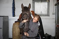 LRV lessen reeks africhting jonge springpaarden 2014