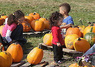 New Hampton, New York - Children look at the pumpkins for sale at Soons Orchards on Oct. 11, 2010, the day the family-owned business was celebrating its 100th birthday.