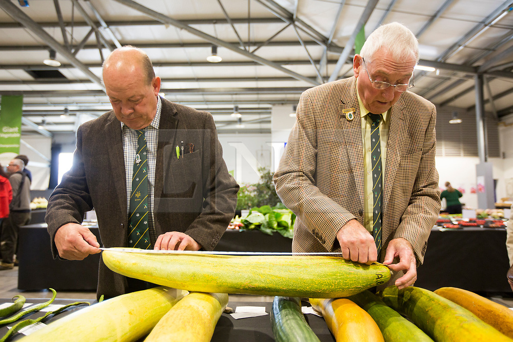 © Licensed to London News Pictures. 15/09/2017. Harrogate UK. Photo credit: Judging has begun this morning at the Giant Vegetable competition at this years Harrogate Autumn Flower Show in Yorkshire. Andrew McCaren/LNP