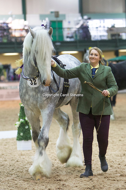 Mr B Lowrie's WITHENS STORMING NORMAN  <br /> Sire  Deighton Silver Treasure<br /> Dam  Goose Greens Starlight<br /> 4th  Stallions 4 years old