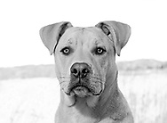 ROAR DOG