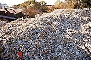 Oyster shells piled up at Bowen's Island restaurant along the Folly River, Charleston, SC.