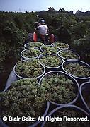 Nissley Vineyards, Lancaster County PA, Pennsylvania vineyard.