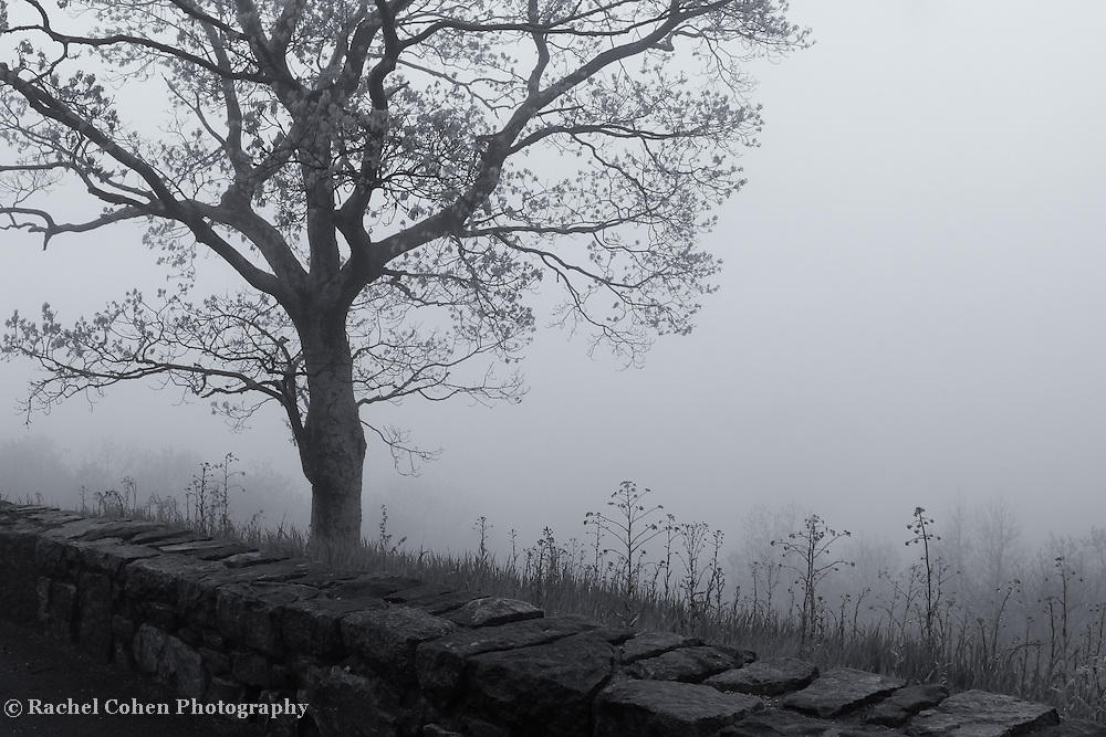 &quot;Foggy Dream&quot; mono <br />
