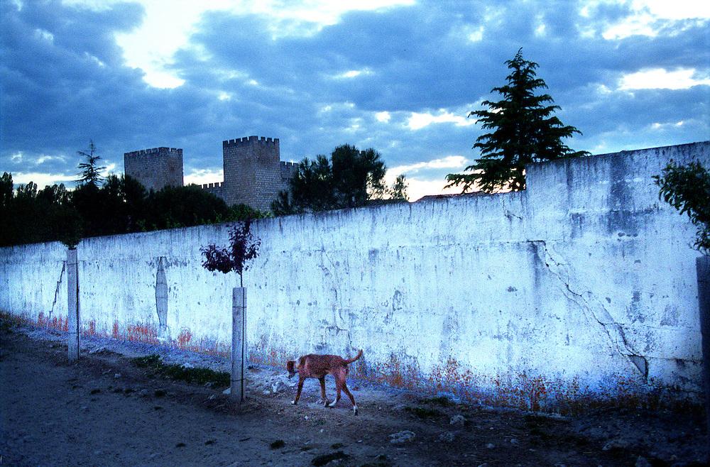 Valladolid, Castilla y Leon, Spain.A stray dog.© Carmen Secanella