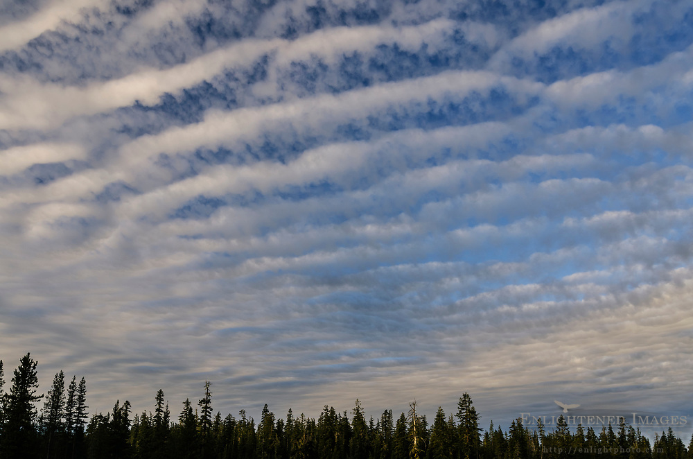 Altocumulus Undulatus clouds over forest in the southern Cascade Range, California