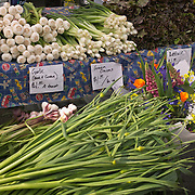 University District outdoor farmers market, Seattle, Washington, fresh garlic, onions, lettuce and flowers<br />
