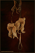 Boston, Ma 082606    Dried up flowers hang from an elaborated doorknob on a mahogany door., (photo by Essdras M Suarez/EMS Photography)
