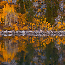 Aspens reflected in Lake Sabrina in autumn in the Eastern Sierra Nevada Mountains near Bishop, CA.