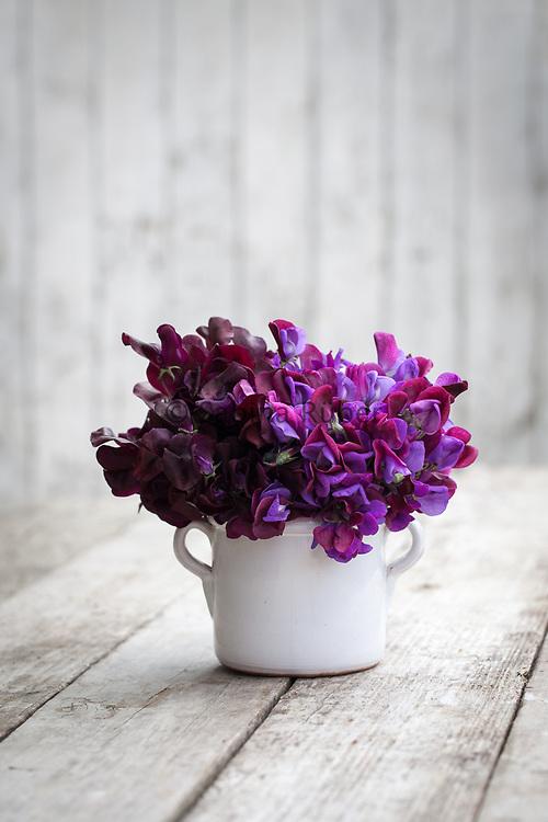 Lathyrus odoratus 'Beaujolais' and 'Cupani' - sweet pea arrangement in small white jug