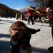 A monkey is used to amuse skiers on a slope near Russia's Black Sea coastal city of Sochi. ..The resort, perched on the foot of snow-capped mountains, is bidding to host the 2014 Winter Olympics.