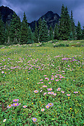Wildflowers and storm clouds, summer, Weminuche Wilderness, San Juan National Forest, Colorado