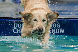 61539529<br /> A dog jumps into the water during a dog diving competition in Budapest, Hungary on May 18, 2014. Dog diving is free time sport testing the skill of the dogs. The owner throws a toy into the pool and the dog jumps into the water to retrieve it. Some dogs enjoy it, while some simply skip the task. Rules of the competition strictly forbid for the owners to toss the dogs into the water. It is a game the dog must enjoy and want to cooperate, Hungary, Sunday, 18th May 2014. Picture by  imago / i-Images<br /> UK ONLY