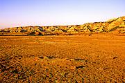 Black-tailed prairie dogs and bison in the badlands of North Dakota. Theodore Roosevelt National Park, North Dakota.