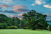 "Lenticular clouds turn pink at sunrise over the Kings Oak at Irton Hall, in Lake District National Park, Cumbria county, England, United Kingdom, Europe. Traditional stories tell of Henry VI sheltering at Irton Hall under the Kings Oak, shown here, now 1000 years old. The then owner, Irton a Yorkist, refused him lodging, so King Henry VI spent the night under the great oak. The next day Henry VI fled over the fell to Muncaster where he was welcomed and so impressed with his reception he presented a glass bowl to Muncaster which is known as ""The Luck of Muncaster."" Irton Hall now offers luxurious Bed & Breakfast accommodation.  England Coast to Coast hike with Wilderness Travel, day 2 of 14. [This image, commissioned by Wilderness Travel, is not available to any other agency providing group travel in the UK, but may otherwise be licensable from Tom Dempsey – please inquire at PhotoSeek.com.]"