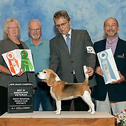 Rocky Mtn. Beagle Club 2019