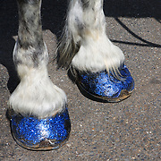 Don't step on my blue suede horseshoes. OK, maybe not suede, but glitter! These hooves are decked out for tourists in Annapolis, MD.
