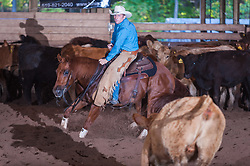 September 24, 2017 - Minshall Farm Cutting 6, held at Minshall Farms, Hillsburgh Ontario. The event was put on by the Ontario Cutting Horse Association. Riding in the Non-Pro Class is John Martin on Ray Too Smart owned by the rider.