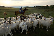 Ten-year-old Munge-Belik shepherds sheep by horse in the taiga in Tuva Republic, Russia.  Like many other animal herders in the republic, his family prefers traditional farming methods but finds it difficult to compete in modern society.