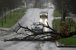 © Licensed to London News Pictures. 03/01/2012, London, UK.  A tree blown down by high wind lies across a road in Banstead in south London as stormy weather hit part of UK, Tuesday, Jan. 3, 2012. Photo credit : Sang Tan/LNP