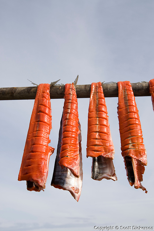 Bristol Bay sockeye salmon are hung out to dry in Iliamna, Alaska before they are smoked for the winters supply.