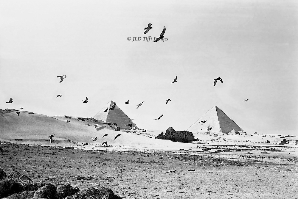 Pyramids with a flock of crows.  Marble-topped peak of Chephren (Khafre) on the left, Great Pyramid (Cheops or Khufu) on the right.