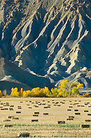 Hay bales in Fremont River valley Utah