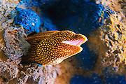 Eel exhibit at Monterey Bay Aquarium, Monterey, California