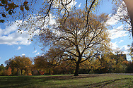 The Great Hill in Central Park.