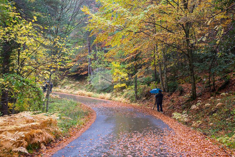 Bosque de hayas y pinos. Valle de Hecho. Parque Natural de los Valles Occidentales. Pirineos. Huesca ©ANTONIO REAL HURTADO / PILAR REVILLA