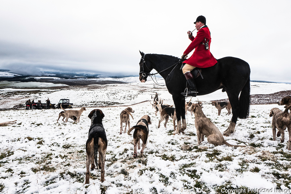 Hawick, Scottish Borders, UK. 9th November 2016. Huntsman Tim Allen of The Duke of Buccleuch Hunt during their opening meet in the snow near Hawick in the Scottish Borders. © Chris Strickland / Alamy Live News