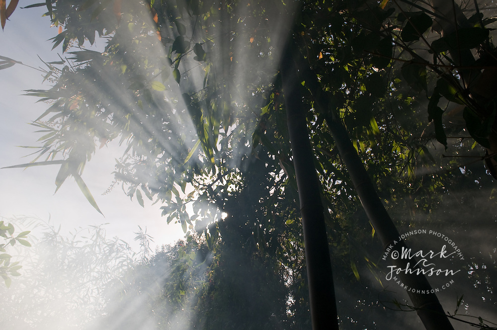 Sunbeams through fog in forest