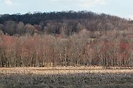 Chester, New York - Spring scenes at Goosepond Mountain State Park on April 18, 2015