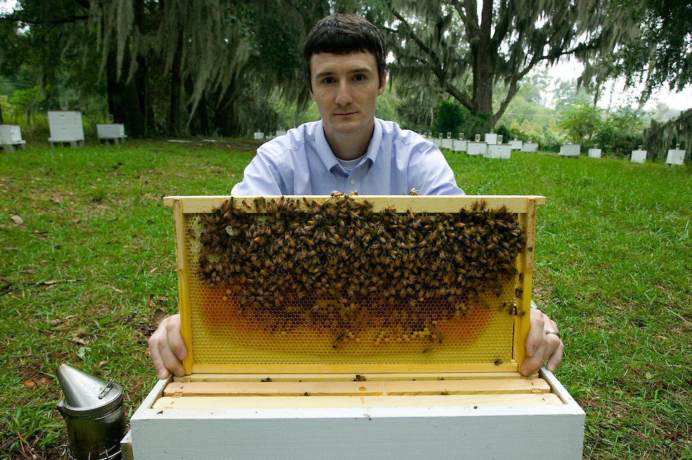 Jamie Ellis. IFAS. Glamour Shot. Joe Kays and Explore Magazine. UF. Bees. Colony Collapse Disorder (CCD). Africanization. Africanized. Honey Bee.