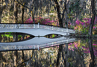 A white bridge crosses the Ashley River and reflects spring flowering azalea at Magnolia Plantation and Gardens in the Lowcountry of South Carolina.