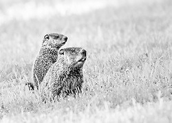 Gopher See, Gopher Do