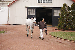 Anchor Down starts the process of covering his first mare, Wednesday, Jan. 18, 2017  at Gainesway Farm in Lexington.