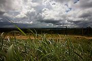 Baldim_MG, Brasil...Chuva na paisagem rural de Baldim...The rain in the rural landscape in Baldim...Foto: LEO DRUMOND / NITRO