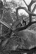 Pojkar i träd